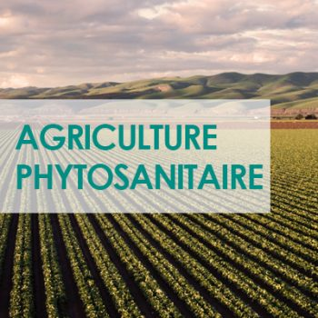 AGRICULTURE_PHYTO